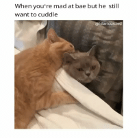 Bae, Funny, and Ted: When you're mad at bae but he still  want to cuddle  @hilarious ted Leave me alone 😾😾