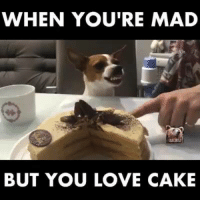 Memes, Cake, and 🤖: WHEN YOU'RE MAD  BUT YOU LOVE CAKE Great way to soften anyone up! Lol!
