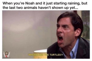 Office Dump: When you're Noah and it just starting raining, but  the last two animals haven't shown up yet...  WHERE ARE THE TURTLES?!  memestorjesus.com Office Dump