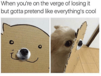 "Cool, Http, and On the Verge: When you're on the verge of losing it  but gotta pretend like everything's cool <p>Everything&rsquo;s cool, people! via /r/wholesomememes <a href=""http://ift.tt/2h6nRxk"">http://ift.tt/2h6nRxk</a></p>"