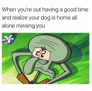 Being Alone, Dank, and Good: When you're out having a good time  and realize your dog is home all  alone missing you 🥺