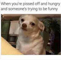 Funny, Hungry, and Memes: When you're pissed off and hungry  and someone's trying to be funny Stfu 😒😒😒 Follow @puro_jajaja
