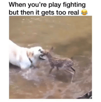 Love, Girl Memes, and Play: When you're play fighting  but then it gets too real a after listening to 'Strange Love' by @theunlikelycandidates