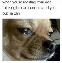 Memes, Mexican, and 🤖: when you're roasting your dog  thinking he can't understand you,  but he can Y'all messed up 😬 FOLLOW US 👉@so.mexican