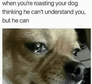 Meirl: when you're roasting your dog  thinking he can't understand you,  but he can Meirl