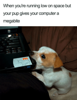 Cute, Dank, and Memes: When you're running low on space but  your pup gives your computer a  megabite Cute doggo by jintaravalerie MORE MEMES
