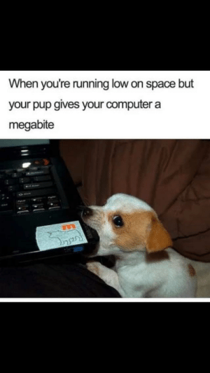 awesomacious:  This put a smile on my face: When you're running low on space but  your pup gives your computer a  megabite awesomacious:  This put a smile on my face