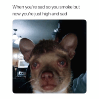 Funny, Instagram, and Best: When you're sad so you smoke but  now you're just high and sad 🔥 @leaflitpod is posting the best stoner content on Instagram! 😂 hurry and follow @leaflitpod before they stop accepting forever! 👀🔞