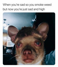 Weed, Dank Memes, and Sad: When you're sad so you smoke weed  but now you're just sad and high Dammit. 😩