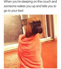 Memes, Couch, and Sleeping: When you're sleeping on the couch and  someone wakes you up and tells you to  go to your bed Follow my backup @comedykhazi 😂