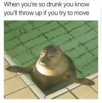 Me right now ... & it's only Monday y me llevaron a beber 😆😆 teamdominican: When you're so drunk you know  you'll throw up if you try to move Me right now ... & it's only Monday y me llevaron a beber 😆😆 teamdominican