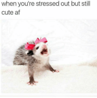 Af, Cute, and Girl Memes: when you're stressed out but still  cute af A stressed hotmess, but well dressed