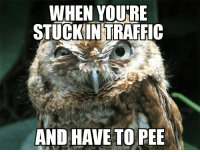 I missed every red light too...: WHEN YOURE  STUCKIN TRAFFIC  AND HAVE TO PEE I missed every red light too...