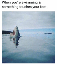 Memes, The Worst, and Worldstar: When you're swimming &  something touches your foot. The worst feeling 🦈😳😭 @worldstar WSHH