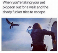 ~Deadpool: When you're taking your pet  pidgeon out for a walk and the  shady fucker tries to escape ~Deadpool