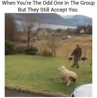 LMAO I'm always the odd one 😂 👉Tag a friend 👉Follow (@soflo) for more laughs: When You're The Odd One In The Group  But They Still Accept You LMAO I'm always the odd one 😂 👉Tag a friend 👉Follow (@soflo) for more laughs