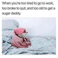 Latinos, Memes, and Work: When you're too tired to go to work,  too broke to quit, and too old to get a  sugar daddy Lmaoo 😂😂😂😂😂 🔥 Follow Us 👉 @latinoswithattitude 🔥 latinosbelike latinasbelike latinoproblems mexicansbelike mexican mexicanproblems hispanicsbelike hispanic hispanicproblems latina latinas latino latinos hispanicsbelike