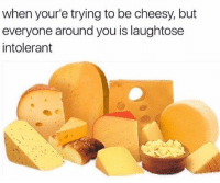 Memes, 🤖, and One: when your'e trying to be cheesy, but  everyone around you is laughtose  intolerant that was a Gouda one - Max textpost textposts