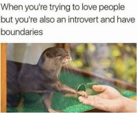 Introvert, Love, and Memes: When you're trying to love people  but you're also an introvert and have  boundaries https://t.co/RWfA44Dsi2
