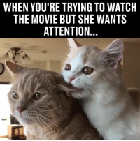 """Memes, Movie, and Watch: WHEN YOU'RE TRYING TO WATCH  THE MOVIE BUT SHE WANTS  ATTENTION """"Pay attention to me!"""" 😂😂"""