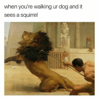 Dogs, Funny, and Memes: when you're walking ur dog and it  sees a squirrel I hate when it happens! @dogsbeingbasic has amazing dogs memes