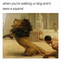 Funny, Squirrel, and Dog: when you're walking ur dog and it  sees a squirrel