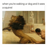 Memes, Squirrel, and 🤖: when you're walking ur dog and it sees  a squirrel fact 😂