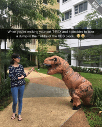 HAHAAH this Sue-Ann ah… really bringing my10ktoday pet walk contest to a whole new level sia!! Only 9 days left to the end of this my10ktoday pet walk challenge… so faster post up your funniest pet walk photos and hashtag my10ktoday now. Don't say bojio ah, but got 3 lucky winners can win Samsung Gear Fit2! Rmb to set your account to 'public' also. More info at the link in our bio! sp: When you're walking your pet TREX and it decides to take  a dump in the middle of the HDB block.. HAHAAH this Sue-Ann ah… really bringing my10ktoday pet walk contest to a whole new level sia!! Only 9 days left to the end of this my10ktoday pet walk challenge… so faster post up your funniest pet walk photos and hashtag my10ktoday now. Don't say bojio ah, but got 3 lucky winners can win Samsung Gear Fit2! Rmb to set your account to 'public' also. More info at the link in our bio! sp