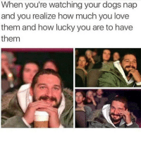 Dogs, Love, and How: When you're watching your dogs nap  and you realize how much you love  them and how lucky you are to have  them