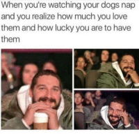 Dogs, Love, and Http: When you're watching your dogs nap  and you realize how much you love  them and how lucky you are to have  them *Cries in doggo*http://www.universeofmemes.com/
