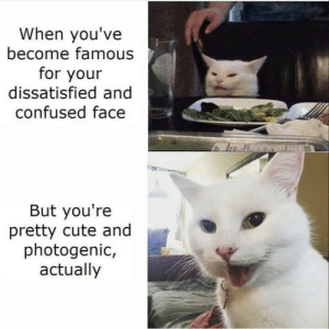 Very cute indeed by jelly_ni- MORE MEMES: When you've  become famous  for your  dissatisfied and  confused face  But you're  pretty cute and  photogenic,  actually Very cute indeed by jelly_ni- MORE MEMES