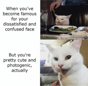 When you've become famous for your dissatisfied and confused face But you're pretty cute and photogenic, actually: When you've  become famous  for your  dissatisfied and  confused face  But you're  pretty cute and  photogenic,  actually When you've become famous for your dissatisfied and confused face But you're pretty cute and photogenic, actually
