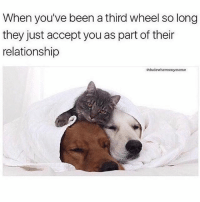Girl Memes, Relationship Status, and Been: When you've been a third wheel so long  they just accept you as part of their  relationship  edudowherosmymeme Current relationship status @dudewheresmymeme