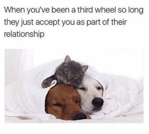 Its three not we.: When you've been a third wheel so long  they just accept you as part of their  relationship Its three not we.