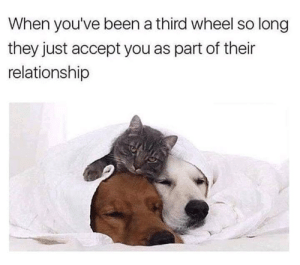 So cute though: When you've been a third wheel so long  they just accept you as part of their  relationship So cute though