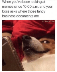 Bae, Funny, and Memes: When you've been looking at  memes since 10:00 a.m. and your  boss asks where those fancy  business documents are  @Friend of Bae Fuck. @middleclassfancy