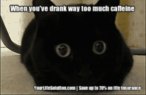 life-insurancequote:  This cat is wired out of it's mind!   : When you've drank way too much caffeine  0 6  Youru teSolutioILcom 1 Save up to 70% on life Insurance life-insurancequote:  This cat is wired out of it's mind!