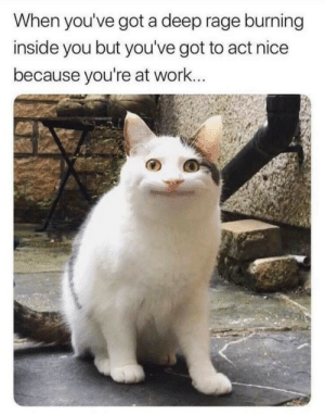Work, MeIRL, and Nice: When you've got a deep rage burning  inside you but you've got to act nice  because you're at work... meirl