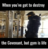 Memes, Crossfit, and Squat: When you've got to destroy  the Covenant, but gym is life @bodybuilding_humour - ......... ......... Tag a fan ..... . 💥💥💥💥💥💥... bodybuilding gymmemes crossfit strong motivation powerlifting quotes gymhumour deadlift squat bench gymhumour funny legdaLaniakeay motivation girlswholift fitchick mma gymhumor gym gymmotivation gymproblems gymflow