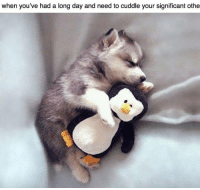 https://t.co/wlUXk0QiCm: when you've had a long day and need to cuddle your significant othe https://t.co/wlUXk0QiCm