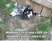 Whenever Itrytohave a BBQ, the  neighbors alwayscheckit out. Whenever I try to have a BBQ, the neighbors always check it out   BOL    #dogs