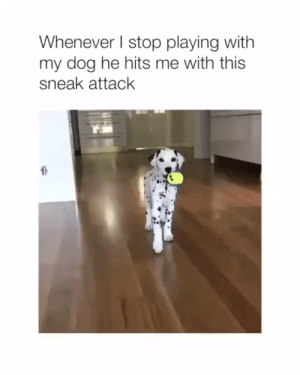 Animals, Cute, and Dogs: Whenever l stop playing with  my dog he hits me with this  sneak attack Cute sneak attack🐶😊#dogs #doglovers #puppy #puppies #animals #animallovers #lovelyanimalsworld #dogvideos