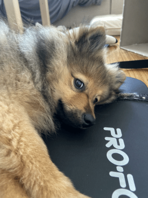 Whenever the yoga mat comes out, this little guy thinks it's nap time: Whenever the yoga mat comes out, this little guy thinks it's nap time