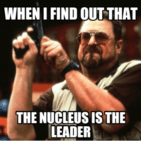 WHENIFIND OUT THAT  THE NUCLEUS IS THE  LEADER