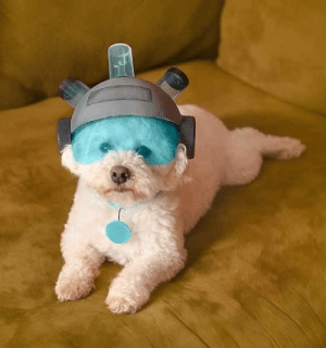 Where are my testicles, Summer? (via): Where are my testicles, Summer? (via)