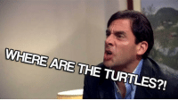 When you realize the turtles are missing: WHERE ARE THE TURTLES?! When you realize the turtles are missing