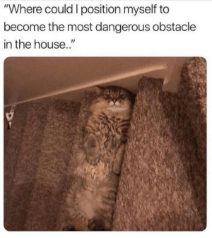 "Ahh my old enemy!!: ""Where could I position myself to  become the most dangerous obstacle  in the house."" Ahh my old enemy!!"