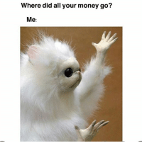 Memes, Money, and 🤖: Where did all your money go?  Me It completely disappeared