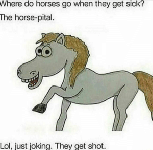 Horses, Lol, and Meme: Where do horses go when they get sick?  The horse-pital  Lol, just joking. They get shot A single good meme in the sea of shit