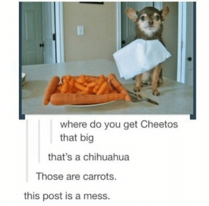 Cheetos, Chihuahua, and Dank: where do you get Cheetos  that big  that's a chihuahua  Those are carrots.  this post is a mess. so is this one by Mission_Dimension MORE MEMES